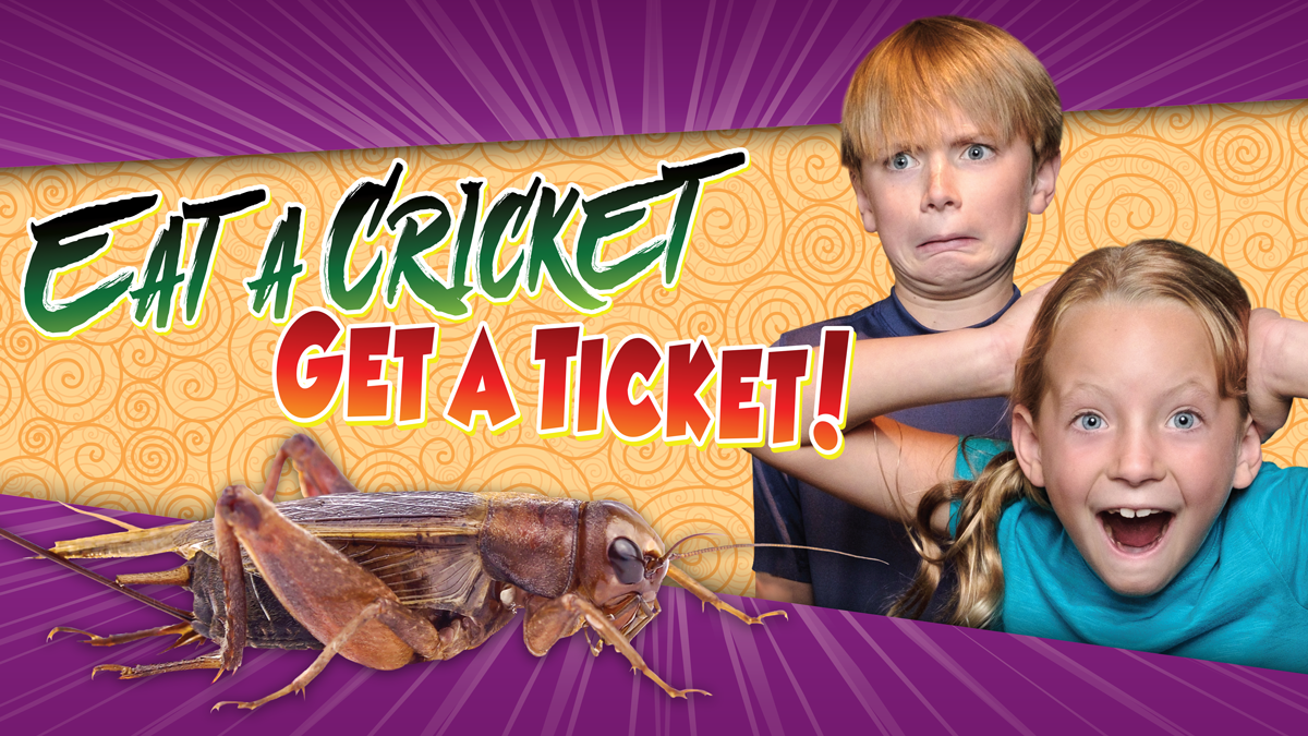 Eat a Cricket Get a Ticket