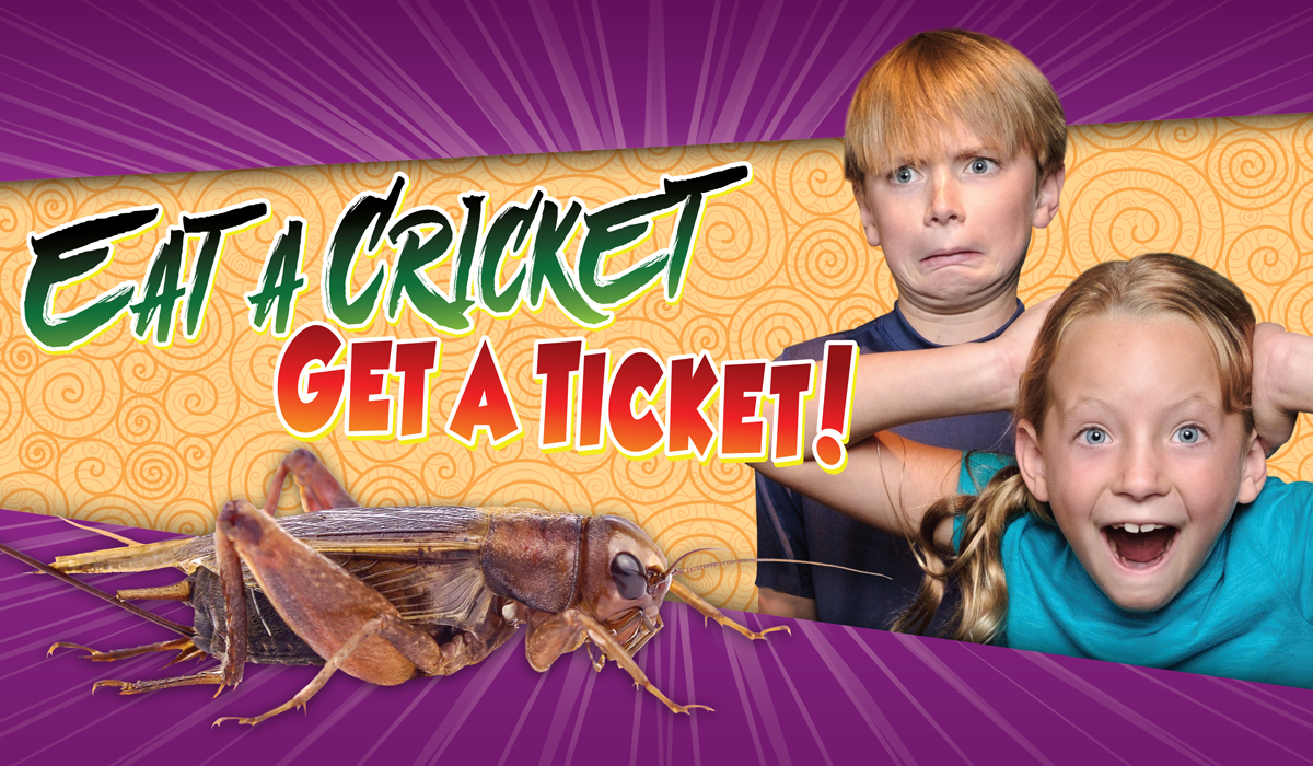 Eat a Cricket Get a Ticket